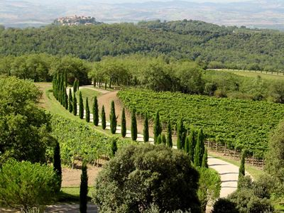 Sangiovese vineyards of Poggio Antico, a leading producer of Brunello di Montalcino.
