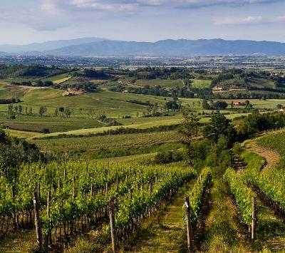 The rolling vineyards of Vino Nobile di Montepulciano.