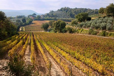 Avignonesi's vineyards roll across the hills of southern Tuscany.